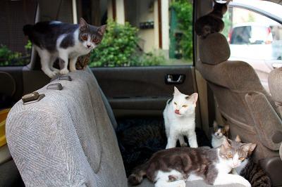 車内生活猫たち